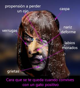 cara_convivir_gato_positivo